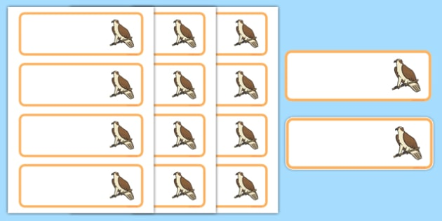 Osprey Themed Editable Drawer-Peg-Name Labels (Colourful) - Themed Classroom Label Templates, Resource Labels, Name Labels, Editable Labels, Drawer Labels, Coat Peg Labels, Peg Label, KS1 Labels, Foundation Labels, Foundation Stage Labels, Teaching L