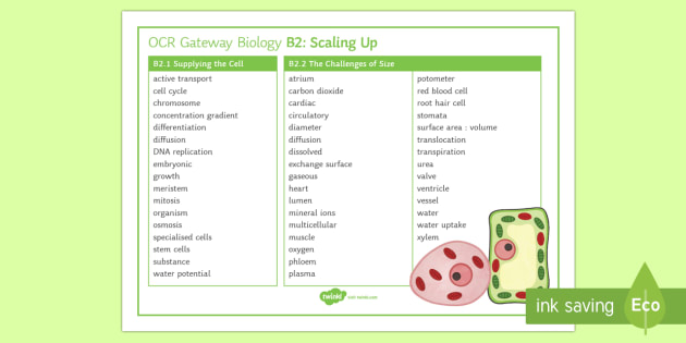 OCR Gateway Biology Topic B2 Scaling Up Word Mat - Word Mat, gcse, keywords, Supplying the cell, the challenges of size, cardiovascular system, transpo