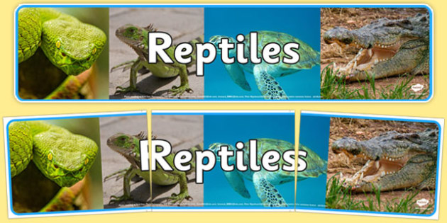 Reptiles Photo Display Banner - reptiles, display banner, photo, display, banner