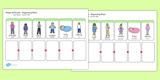 Stages of Growth Sequencing Sheet Arabic Translation - arabic, sequencing, sheet, growth
