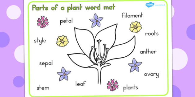 Parts of a Plant Word Mat - Plant, Parts, Word, Mat, Vocabulary