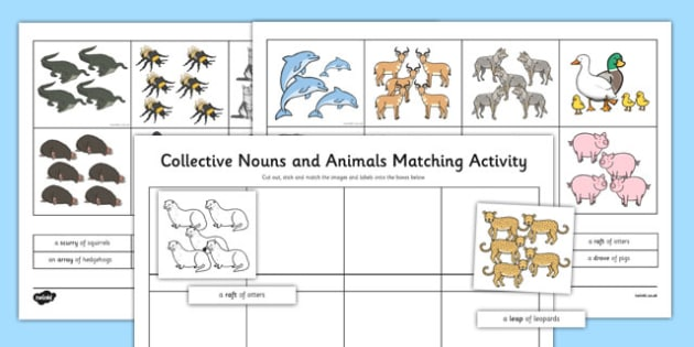 Collective Nouns Groups of Animals Activity Sheet - collective, nouns, animals, worksheet