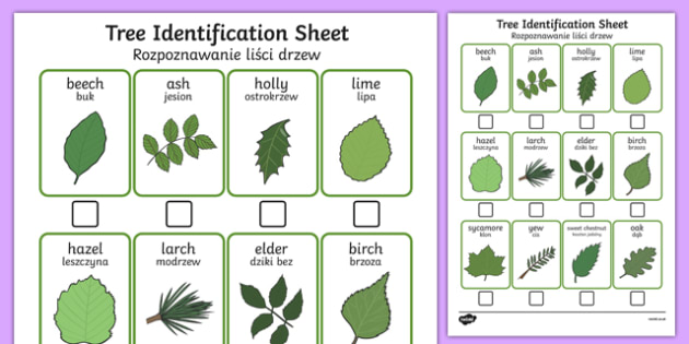 Tree Identification Sheet Polish Translation