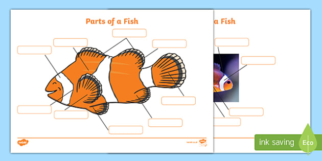 Parts of a Fish Labelling Sheets (Under the Sea)- parts of a fish, parts of a fish labelling, parts of a fish display poster, parts of a fish labelling worksheets, fish