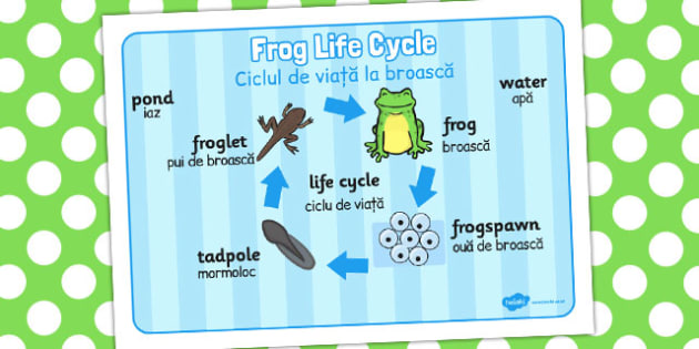 Frog Life Cycle Word Mat Romanian Translation - frogs, visual aid
