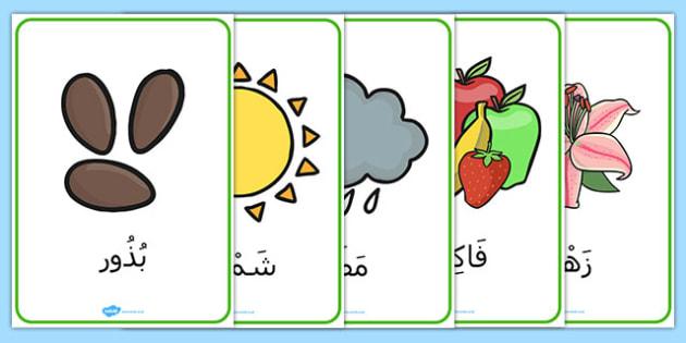 ملصقات مفردات النبات والنمو - النمو، نباتات، تشجير، تنمية، إنبات