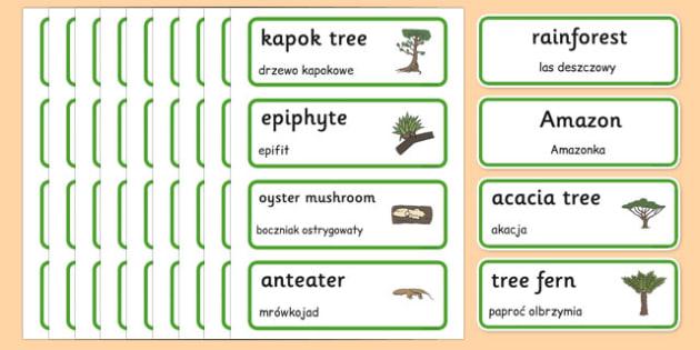 Rainforest Word Cards Polish Translation - rainforest, amazong, plants, trees, vocabulary, polish, poland, eal, rain, forest, habitat, environment