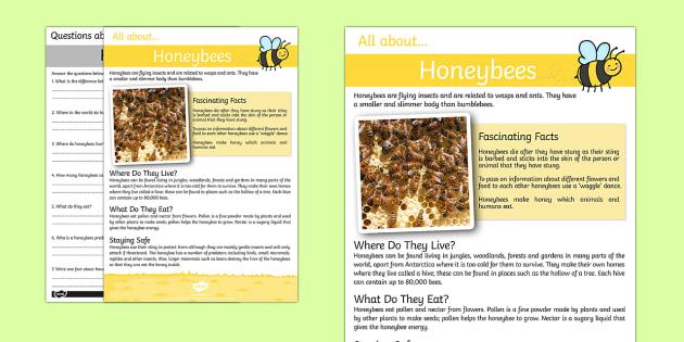 Honeybee Reading Comprehension - honeybee, reading, comprehension