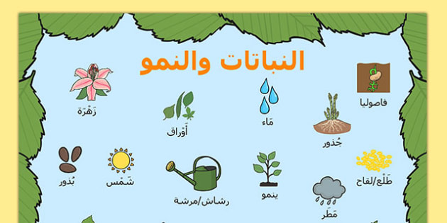 بساط كلمات مفردات النباتات والنمو - شبكة كلمات، النمو، النباتات