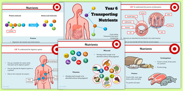 Year 6 Transporting Nutrients Teaching PowerPoint - health, food
