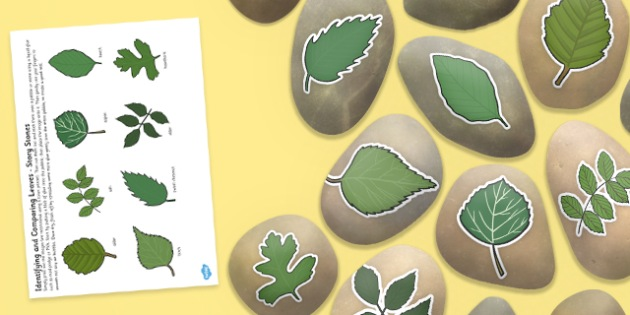 Identifying and Comparing Leaves Story Stone Image Cut Outs - indentifying, comparing, story stone
