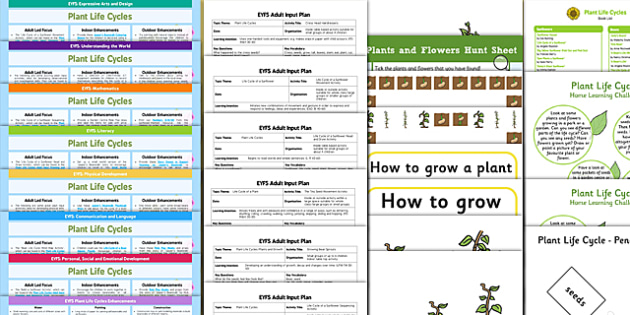 EYFS Plant Life Cycles Lesson Plan Enhancement Ideas and Resources Pack - Early Years, continuous provision, early years planning, plants, flowers, growth, growing, sunflower, beanstalk, cress