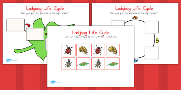 Ladybug Life Cycle Worksheets - ladybug, life cycle, worksheet