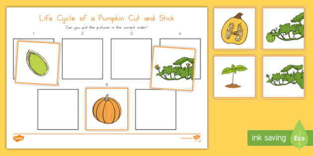 Life Cycle of a Pumpkin Cut and Stick Activity Sheet