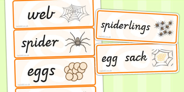 Spider Life Cycle Word Cards - life cycles, visual aid, keywords