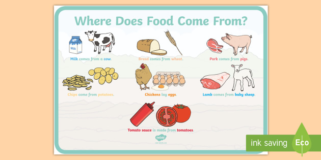 Where Does Food Come From Display Poster - Where Does Food Come From A4 Display Posters - food, display, posters, where does food come from, or