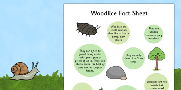Woodlice Fact Sheet - woodlice, fact file, factfile, fact, file, minibeast, eyfs