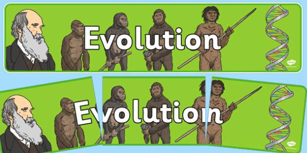 Evolution Display Banner NZ - nz, new zealand, evolution, display banner, display, banner