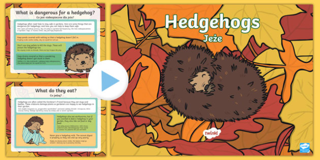 Hedgehogs powerpoint English/Polish