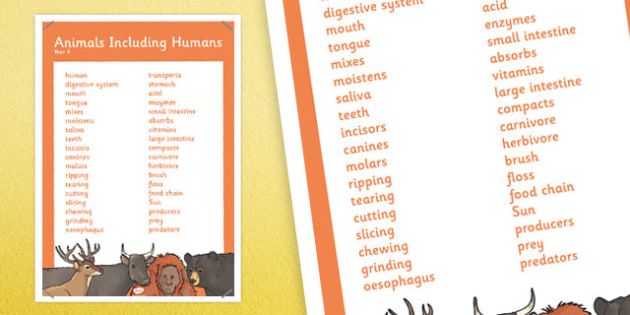 Year 4 Animals Including Humans Scientific Vocabulary Poster