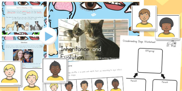 Inheritance and Evolution Differentiated Lesson Teaching Pack
