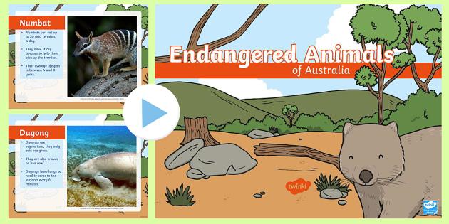 Endangered Australian Animals PowerPoint - australia, animals, endangered