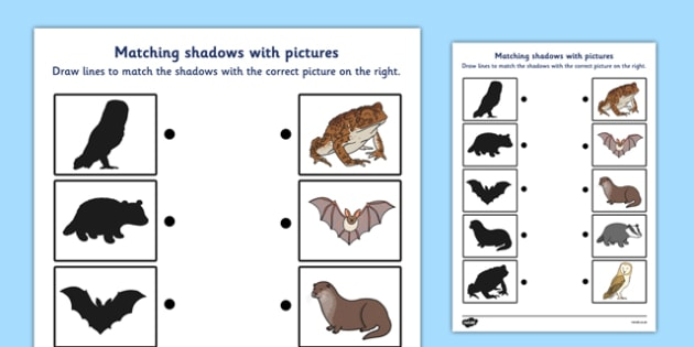wild nocturnal animals shadow matching worksheet wild. Black Bedroom Furniture Sets. Home Design Ideas