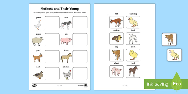 Mothers and Their Young Farm Animals Matching Activity - farm, on the farm, mothers and their young, mothers and their young matching activity, matching