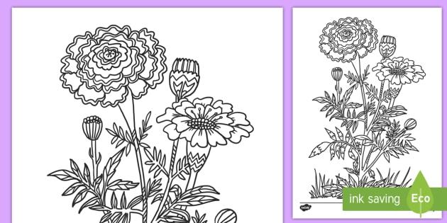 Day of the Dead Marigold Coloring Activity - Day of the Dead, coloring, coloring pages, November 1st, art, dia de los muertos