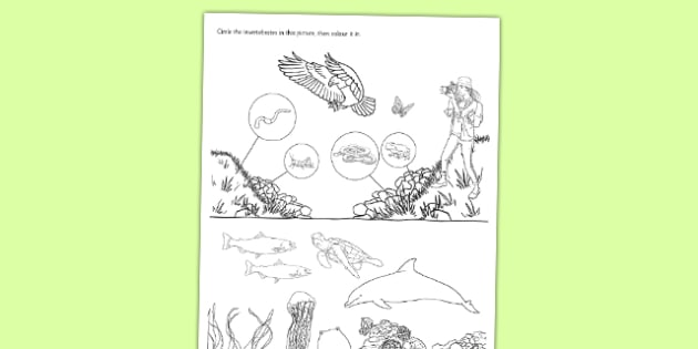 Spot the Invertebrates Activity Sheet - living things, habitats, variation, classification, grouping, invertebrates, characteristics, keys, worksheet