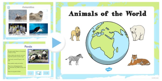 EYFS Animals From Around the World PowerPoint - animal, geography