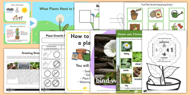 Top 10 Growing Plants Activity Pack