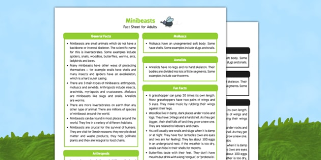 Minibeasts Fact Sheet for Adults - EYFS, Early Years, KS1, Key Stage 1, insects, bugs, creepy crawlies, science, understanding the world