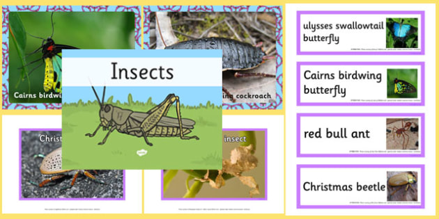 Australian Insects pack - australia, animals, insects, pack, australian