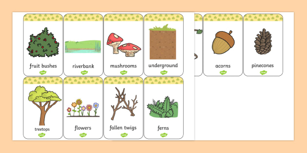 Woodland Animals Habitat Flashcards - Woodland, Habitat, Animals
