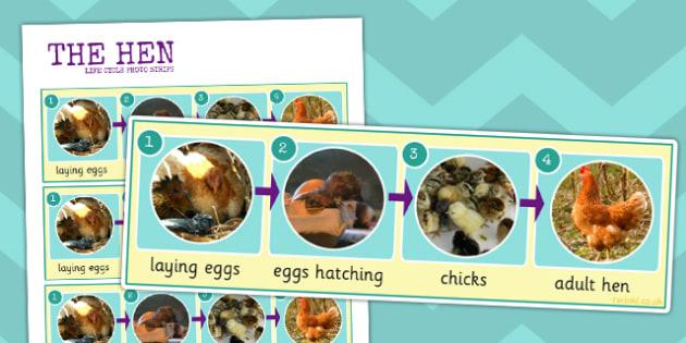 Hen Life Cycle Photo Strip - hen, life cycle, photo strip, photo