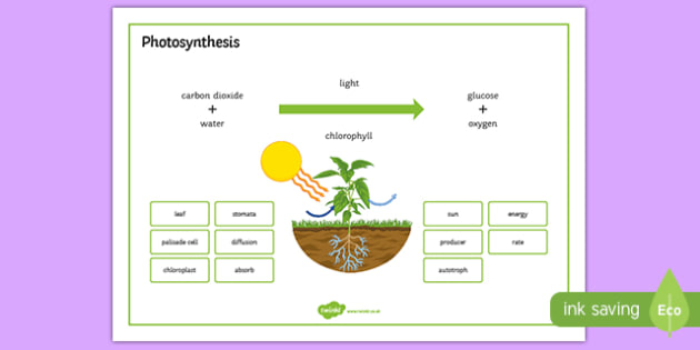 Photosynthesis Word Mat