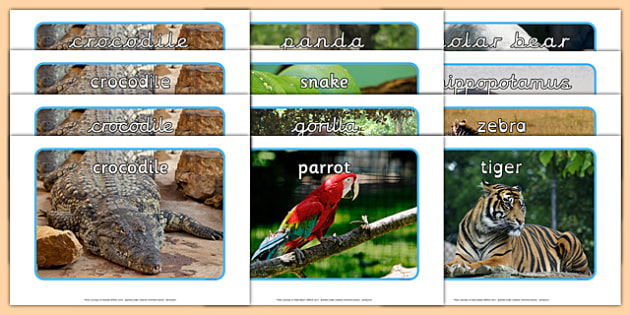 Zoo Animals Display Photos - EYFS, Early Years, animals, zoo, wild, nature, endangered