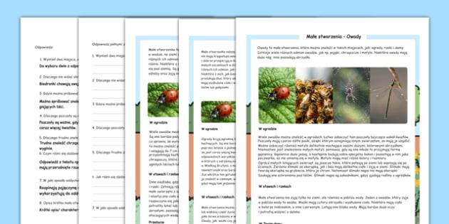 Czytanie ze zrozumieniem różne poziomy Małe stworzenia i owady po polsku