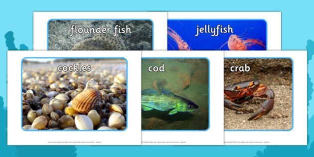 Marine Life Display Photo Pack - marine life, display photo, pack, display, photo