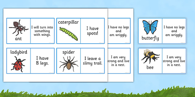 Minibeasts Description Loop Cards - loop cards, cards, flashcards, loop, minibeast loop cards, minibeast description loop card game, descriptions game, adjectives game, literacy, minibeast loop card game, loop games, games, loop game, activity