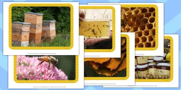 Honey Photo Display Pack  - honey, photo, display pack, display, pack, judaism