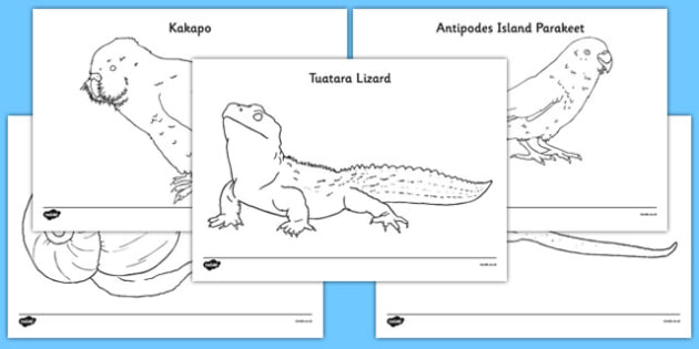 Zealand Animals Colouring Pages