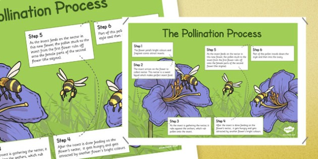 Pollination Information Poster - pollination, information poster, display, information, poster, pollinate, bee, flowers, reproduce