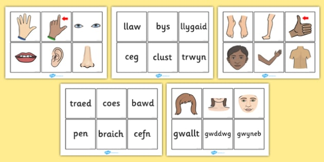 Parts Of The Body Word and Picture Matching Cards Welsh - welsh, parts, body, word, picture, matching, cards