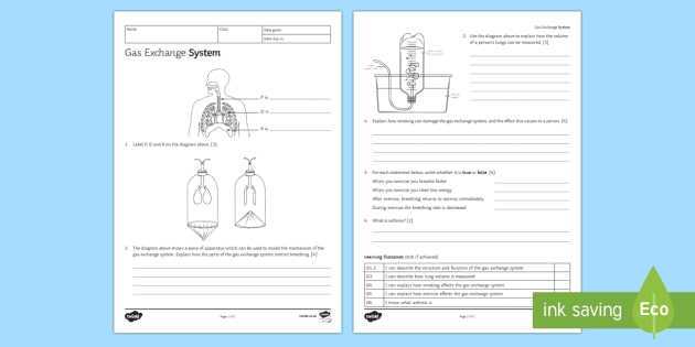 KS3 Gas Exchange Homework Activity Sheet - Homework, gas exchange, breathing, inhaling, inhale, exhaling, exhale, breath, lungs, air, carbon di