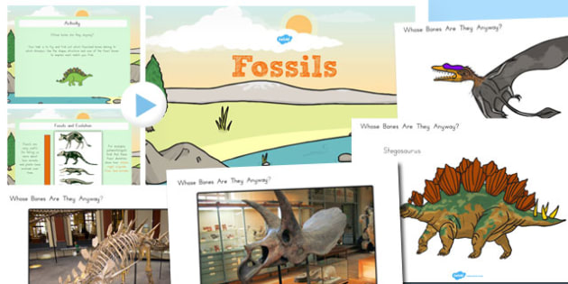 Fossils and Evolution Year 5 Differentiated Lesson Teaching Pack