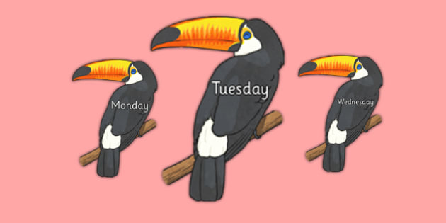 Days of the Week on Toucans - days, week, toucans, animals, birds, display