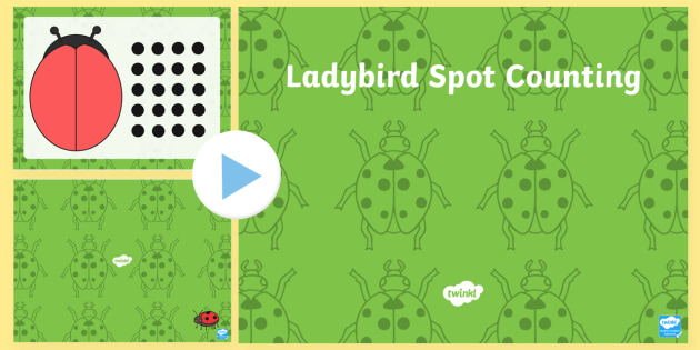 Ladybird Spot Counting Activity PowerPoint - ladybird, minibeast, counting, count, activity, powerpoint