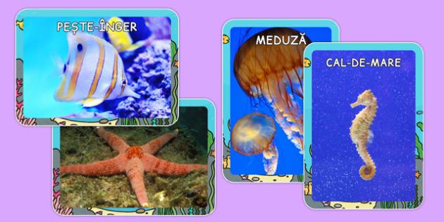 Animalele marine - Fotografii - animale marine, mare, litoral, la mare, fotografii, soare, nisip, științe, vară, materiale didactice, română, romana, material, material didactic